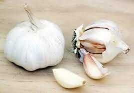 garlicx